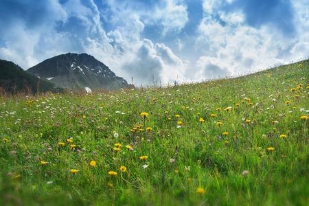 alp: Alp meadow with cloudy sky