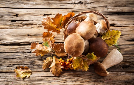 Ceps on wooden table, autumn harvest crop photo