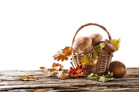 Ceps on white background, autumn harvest crop photo