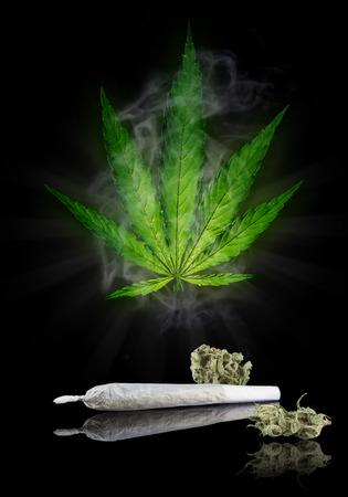 blubber: Dried cannabis plant, marijuana on black background Stock Photo