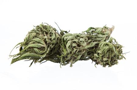 blubber: Cannabis dried plant, marijuana on white