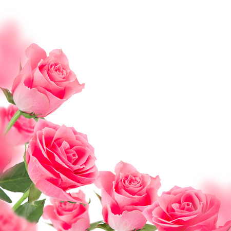 Pink roses, Valentine background
