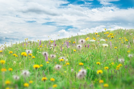 spring water: Mountain meadow with beautiful flowers