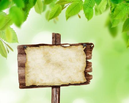 hojas parra: Fondo natural con hojas listas para su producto o texto.