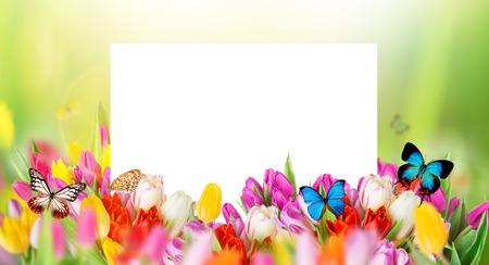 exotic butterflies: tulipanes sobre fondo verde borrosa y mariposas ex�ticas, ramo de flores de primavera de Pascua.