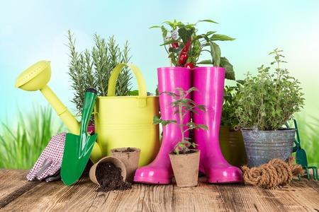 botanical garden: Outdoor gardening tools and herbs, close-up. Stock Photo