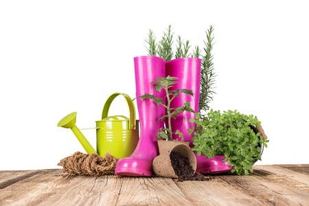 garden tool: Outdoor gardening tools and herbs, close-up. Stock Photo