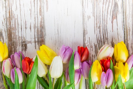 tulip: Colored tulips