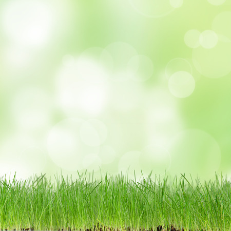 green meadow: Fresh spring background with green grass Stock Photo