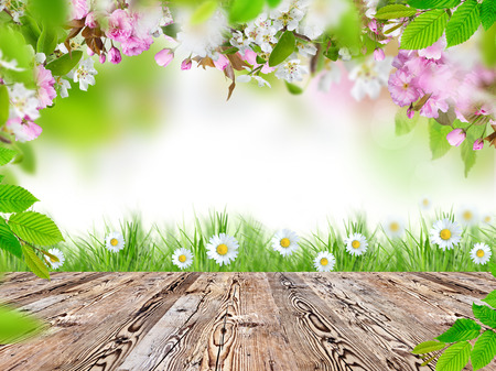spring green: Fresh spring background with wooden table Stock Photo