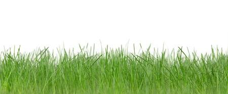 緑の芝生 写真素材