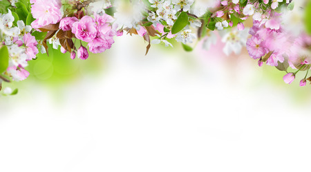 Spring background Stock Photo - 37343554