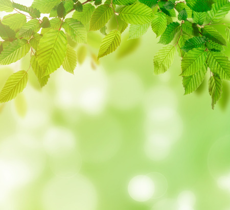 green nature: Green nature background, lots of copy space. Stock Photo
