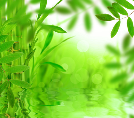 still water: Green nature background, lots of copy space. Stock Photo