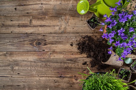 屋外のガーデニング、植物やクローズ アップすることができます。