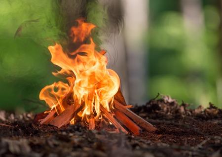 春の森でたき火クローズ アップ。 写真素材 - 39655457