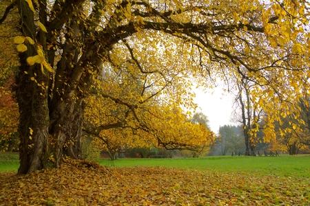 秋。秋。秋の公園。秋の木。