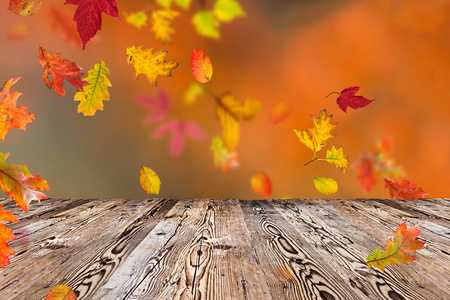 Colorful autumnal background with leaves, close-up Imagens - 45148055