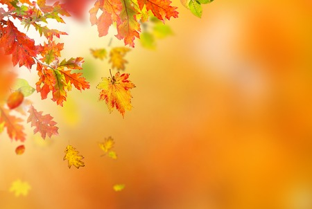 Colorful autumnal background with leaves, close-up