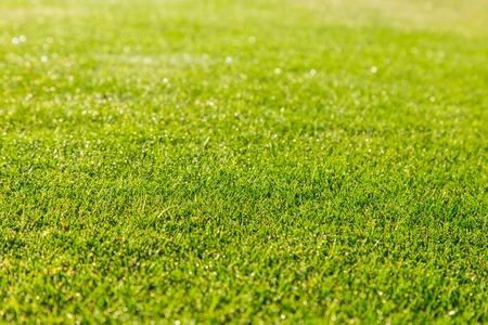vysoký úhel pohledu: zelená tráva textury na pozadí