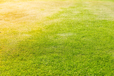 high angle: green grass texture for background Stock Photo