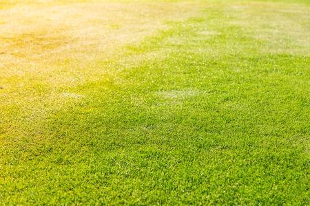 green grass: green grass texture for background Stock Photo