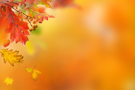 leaf pattern: Colorful autumnal background with leaves, close-up