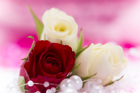 red wallpaper: Valentine red rose abstract background wallpaper. Stock Photo