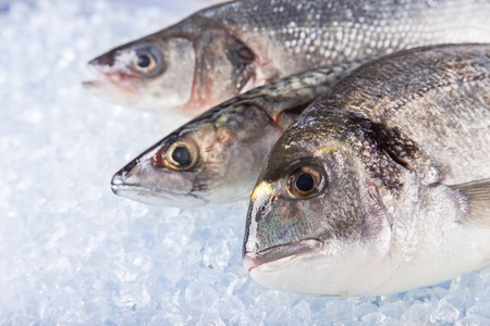 gilthead bream: Fresh sea fishes on crushed ice, close-up. Stock Photo