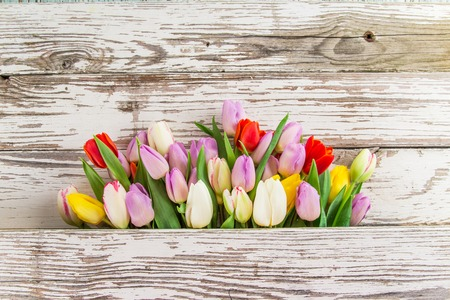 table top: Colorful tulips on wooden table. Top view.