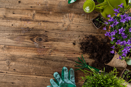 Gardening tools and flowers on wooden background, close-up. Stockfoto