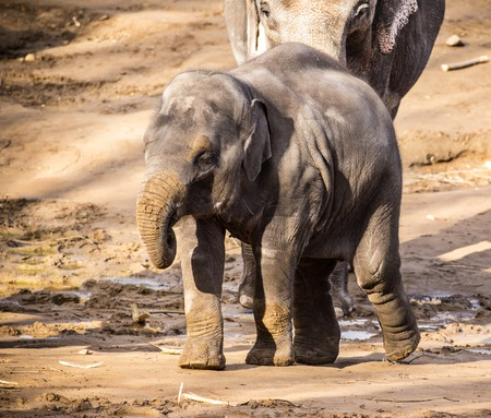 Herd of elephants on sandy ground. close-up. Stock Photo