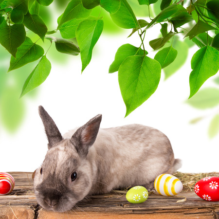 sweet grasses: Funny little rabbit. Easter background. Close-up.
