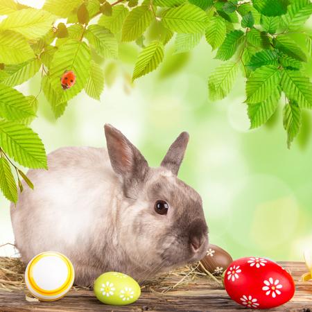 pequeño conejo divertido. Fondo de Pascua. De cerca. Foto de archivo