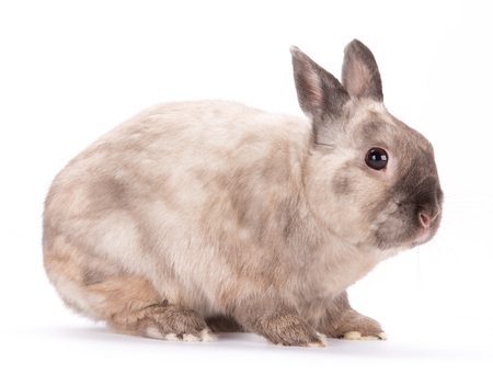 bunnie: Funny little rabbit isolated on white background.