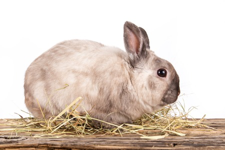 sweet grasses: Funny little rabbit isolated on white background.