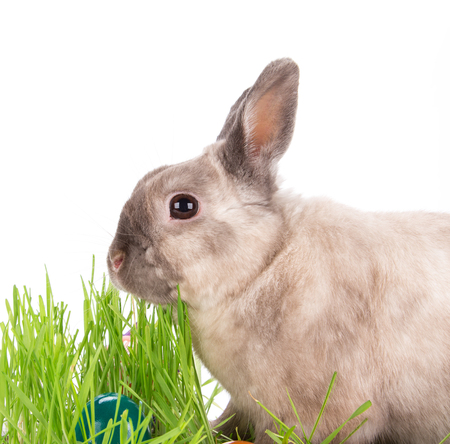 funny easter: Funny little rabbit. Easter background. Close-up.
