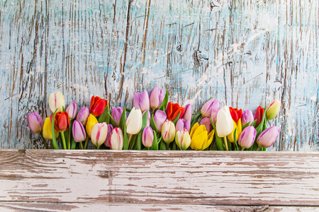 white wedding: Colorful tulips on wooden table. Top view.