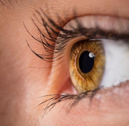 closeup view: Woman eye with long eyelashes. Macro shot.