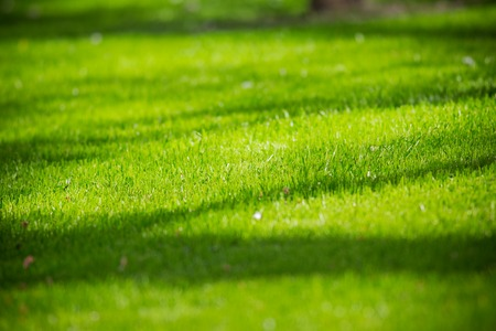 conservation: green grass texture for background Stock Photo