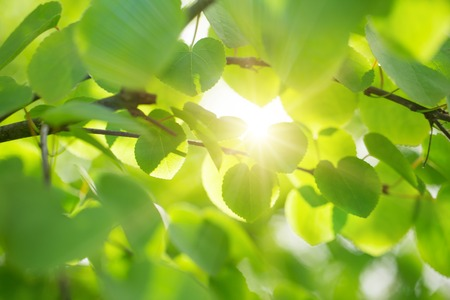 Fresh green background with leaves, spring theme. Stock Photo
