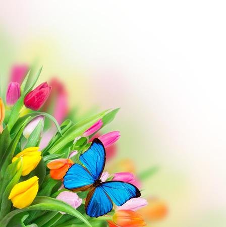 Bellos tulipanes ramo con las mariposas. tema de la primavera.