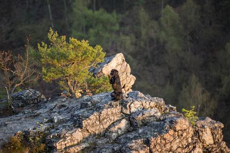 dog rock: Beautiful mutt black dog Amy on mountain rock, close-up.