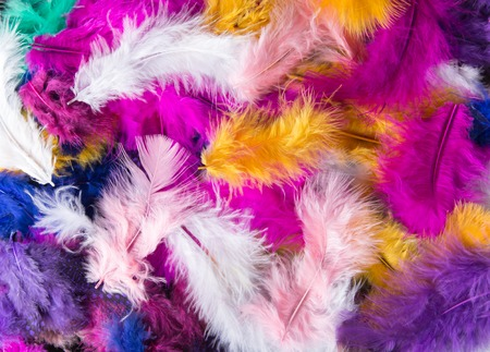 feathering: Colored different Feathers background pattern., close-up.