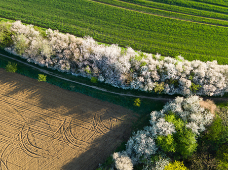 top down: Aerial view of forest and fields. Spring season.