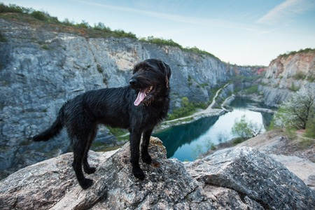 mutt: Beautiful mutt black dog on mountain rock with a flooded quarry.