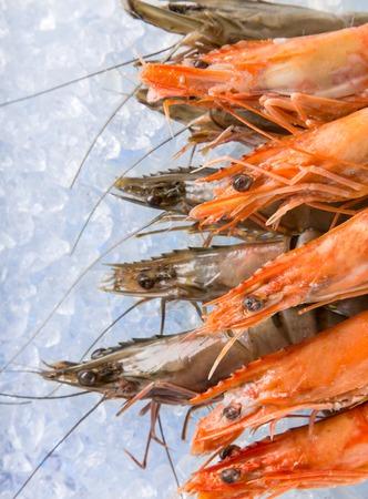 ice crushed: Fresh prawns on crushed ice, close-up.