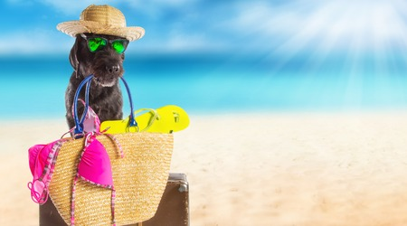 copy paste: Funny summer black dog with summer accessories. Funny summer concept. Stock Photo