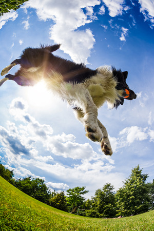 Border Collie jumping for the ball. Beautiful cloudy sky in background. Stock Photo