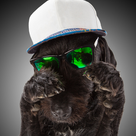 posed: Black dog posed with sunglasses and cap, close-up. Stock Photo
